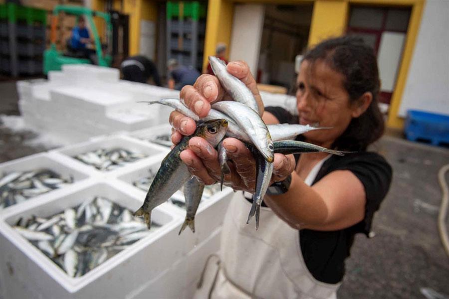 Imagem: Lota da Figueira Foto Rui Miguel Pedrosa / Global Imagens, em https://www.dn.pt/pais/interior/pescadores-celebram-regresso-ao-mar-esta-e-a-melhor-sardinha-do-mundo-10972429.html (11/6/2019)